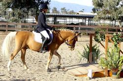 SantaCruz Island Horse