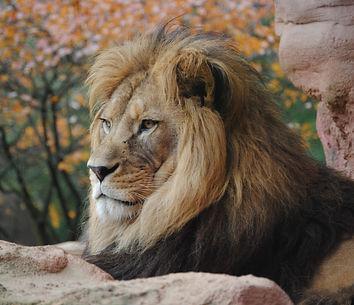 Canva - Wild Lion Outdoors.jpg