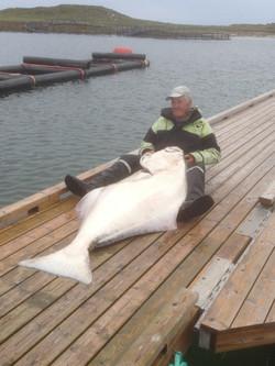 Fiske, Flostad Rorbuer, Herøy