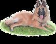 Buttons & Leash Dog Training – Redhill, Surrey