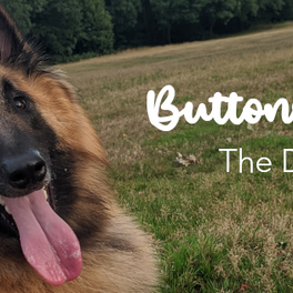 Welcome to Our New Dog Blog