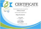 Puppy Training Redhill, Puppy Trainer Redhill, Dog Training Redhill, Dog Trainer Redhill, Puppy Obedience Redhill