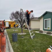 Tree trimming Richland WA