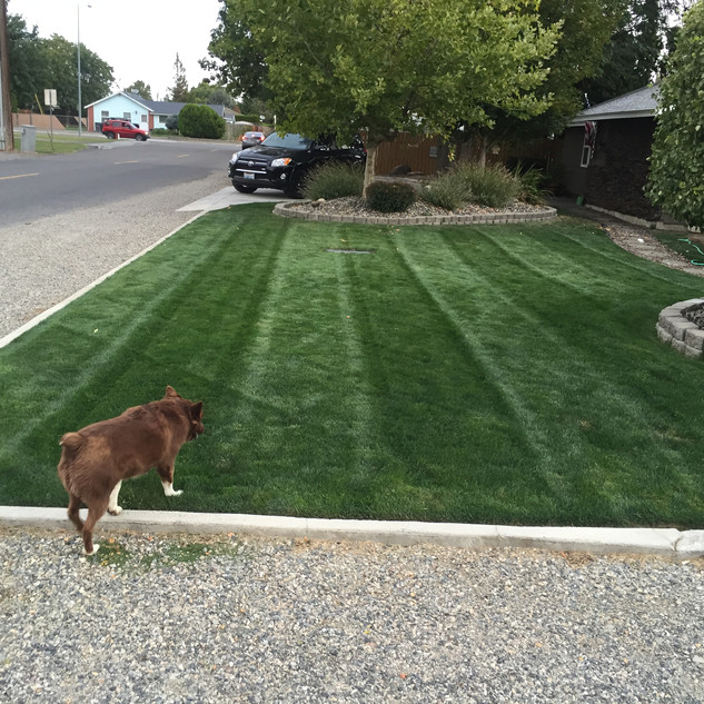 Kennewick, lawn care
