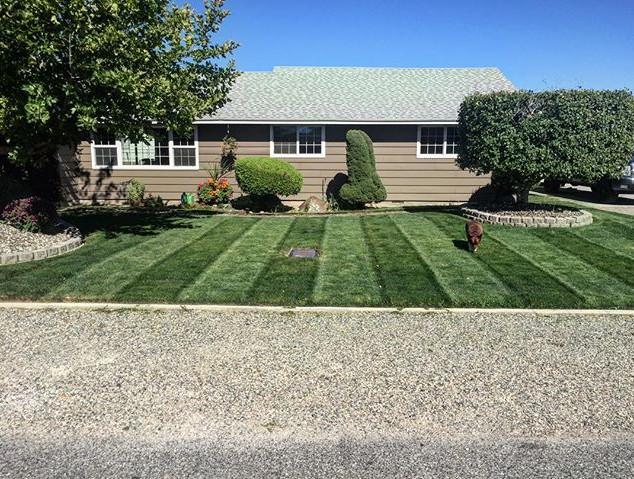 Lawn treatment, Kennewick