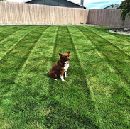 Lawn treatments, Kennewick WA