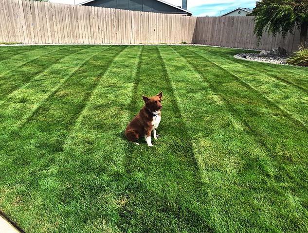 Lawn treatments, Kennewick WA