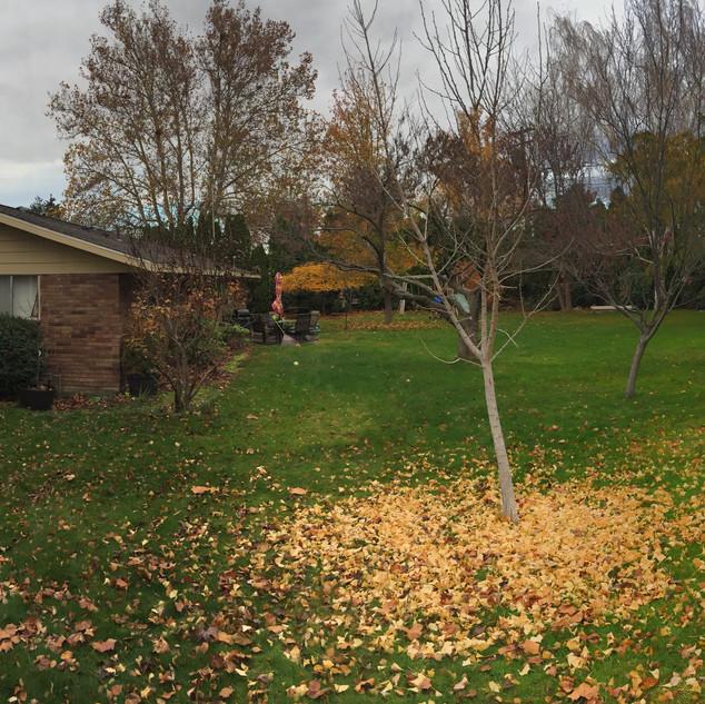 Cleanups, Richland WA