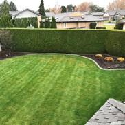 Kennewick shrub trimming