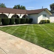 Residential shrub trimming