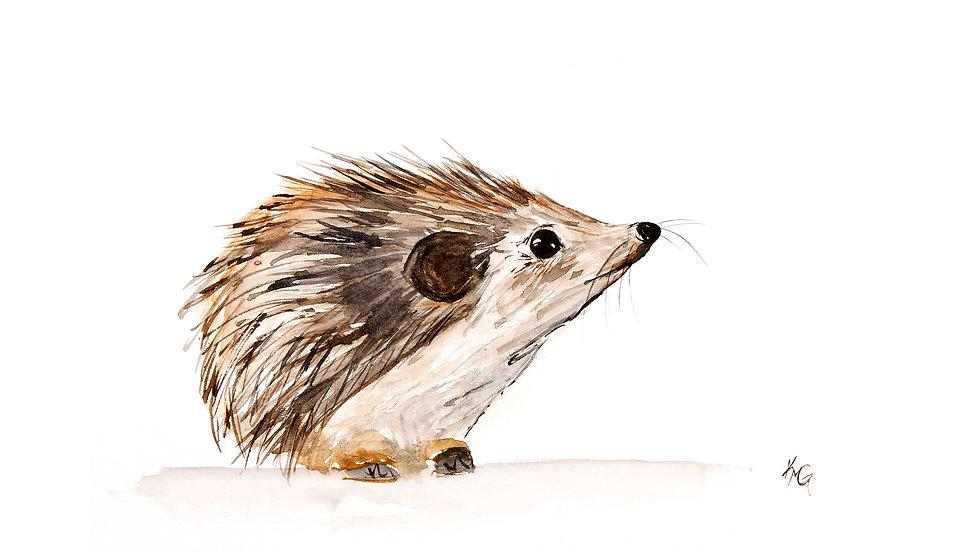 Hedgehog- Watercolor Print