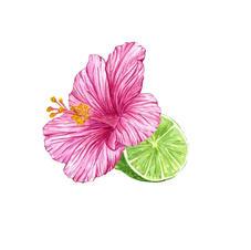 Hibiscus Keylime