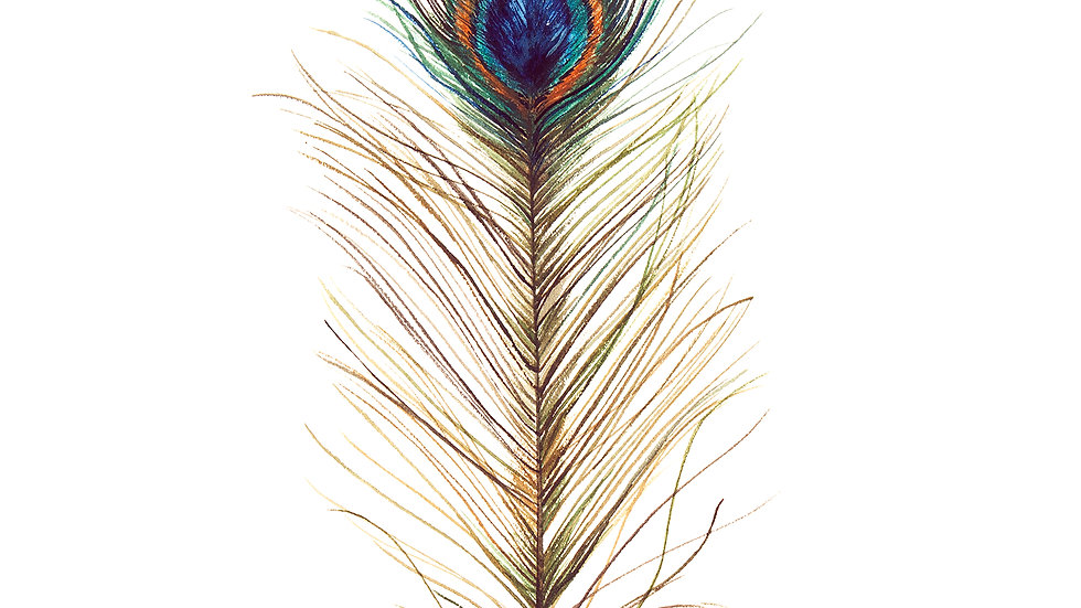 Peacock Feather- Watercolor Print