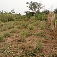 Live Fence Surrounding the Land