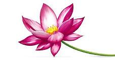 f87f98d1428f2989a4be97909102359d--lotus-