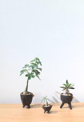 Alienated Plant Pots