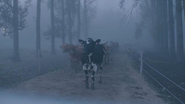 Vaches de la Ferme de la Tremblaye