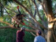 Kenny in a tree 2.jpg