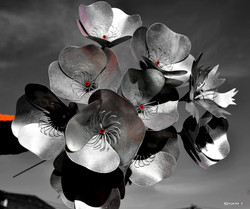 """Fleurs Be-zinc"""