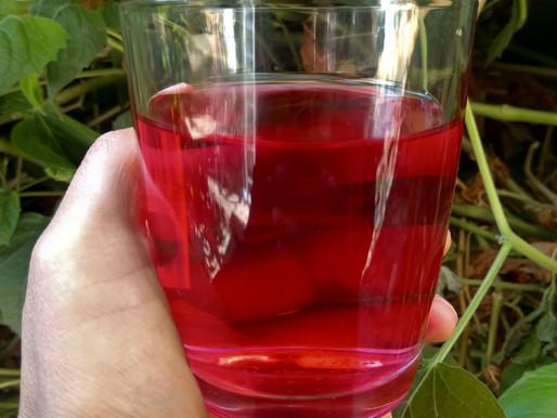 Sangorache, horchata de amaranto