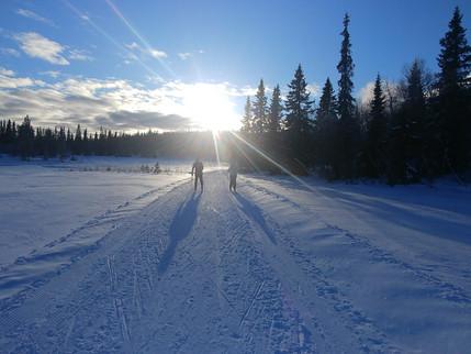 ノルウェーの森で初クロスカントリー