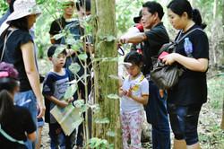 Tree bank