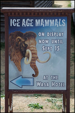 Ice Age Display