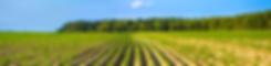 Header-Agriculture-3.png