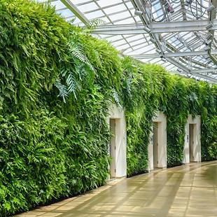 murs-vegetalises.png