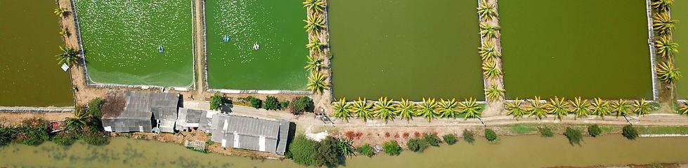 Header-Aquaculture-3.png