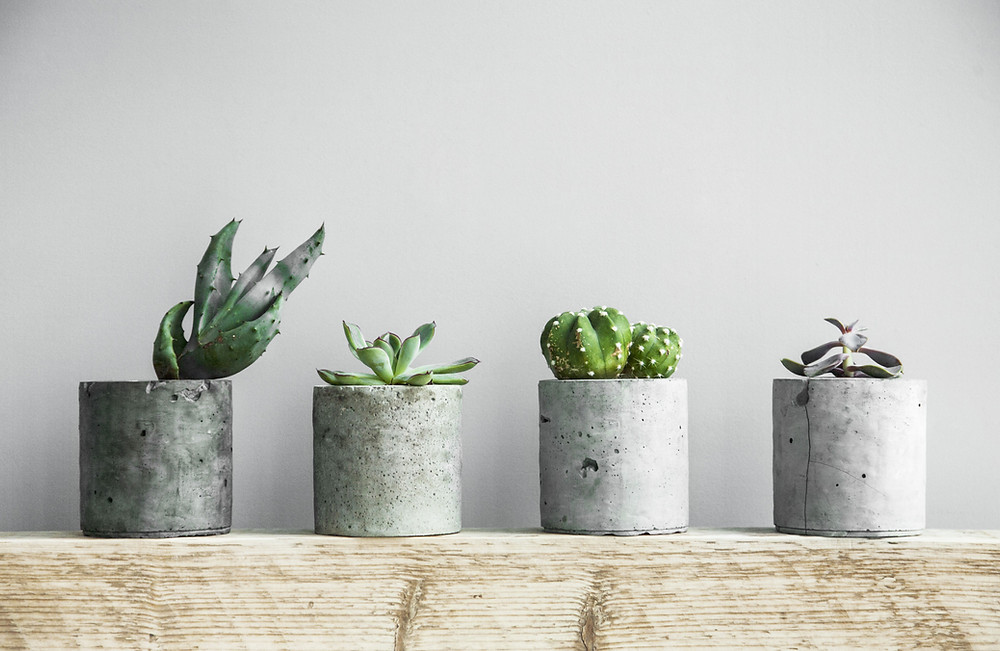 Reasons you need plants in the home