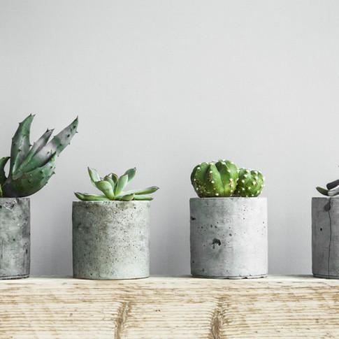 Vasos de Cactos e Suculentas