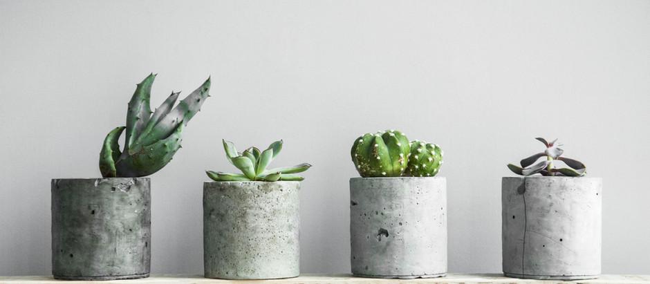 WHY YOU NEED INDOOR PLANTS