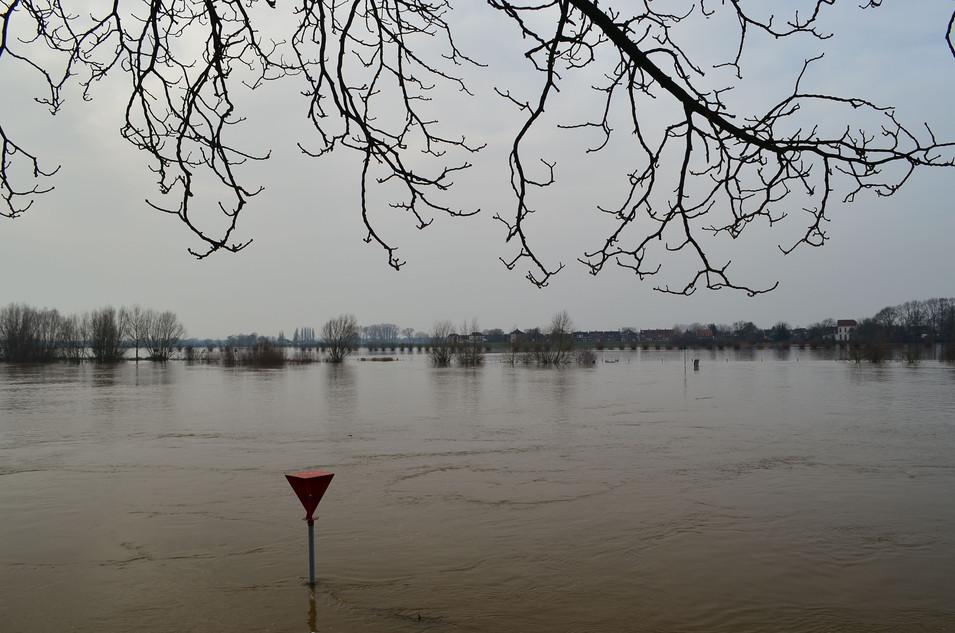 IJssel bij  hoogwater, jan. 2018