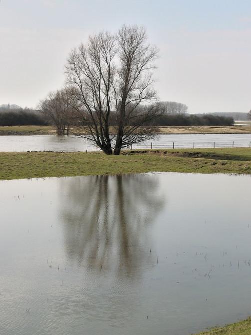 boom langs de IJssel