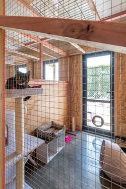 Cat & Suite