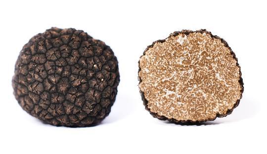Herbsttrueffel-Tuber-Uncinatum-Vitt-dopp
