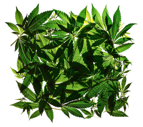 WEED LEAVES OVERLAPPING