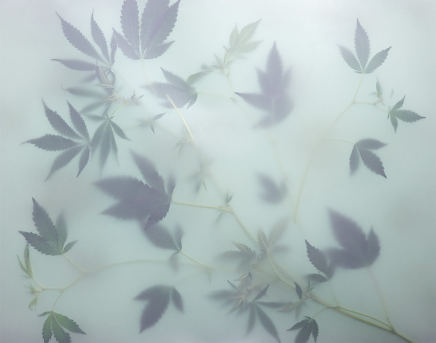HAZY WEED WALLPAPER