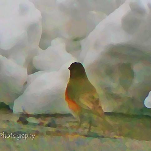 Photo in Oil: Robin in Snow