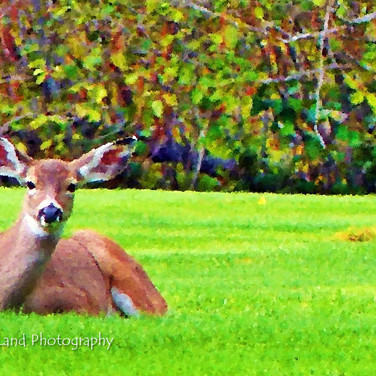 Photo in Oil: Deer on Golf Course