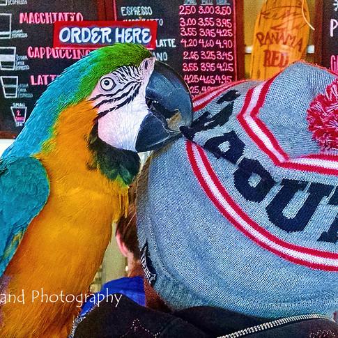 Mocha, Latte, or My Hat