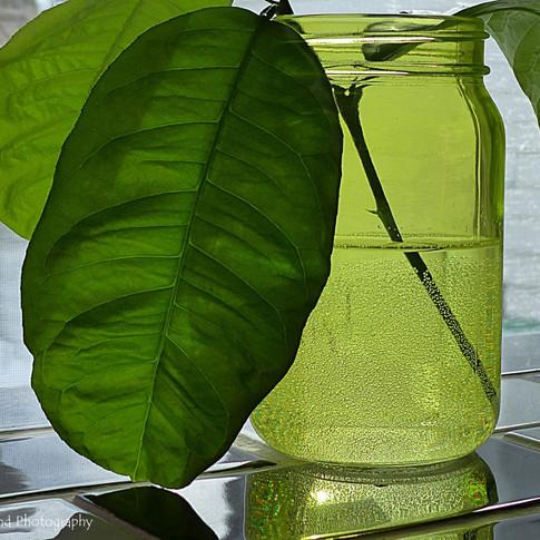 Lemon Leaves in Jar