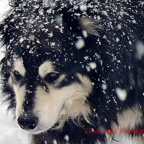 Tanner in Snow