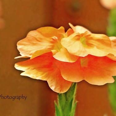 The Color of Orange