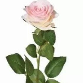 Elegant Single Stem Roses (3)