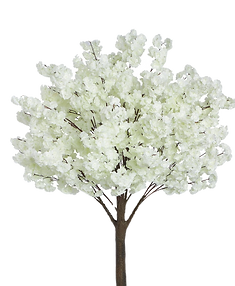 6' Cream Dogwood Tree