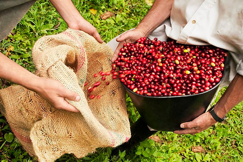 GREEN Beans - Organic