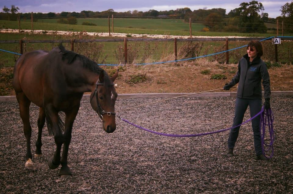 Equine Groundwork
