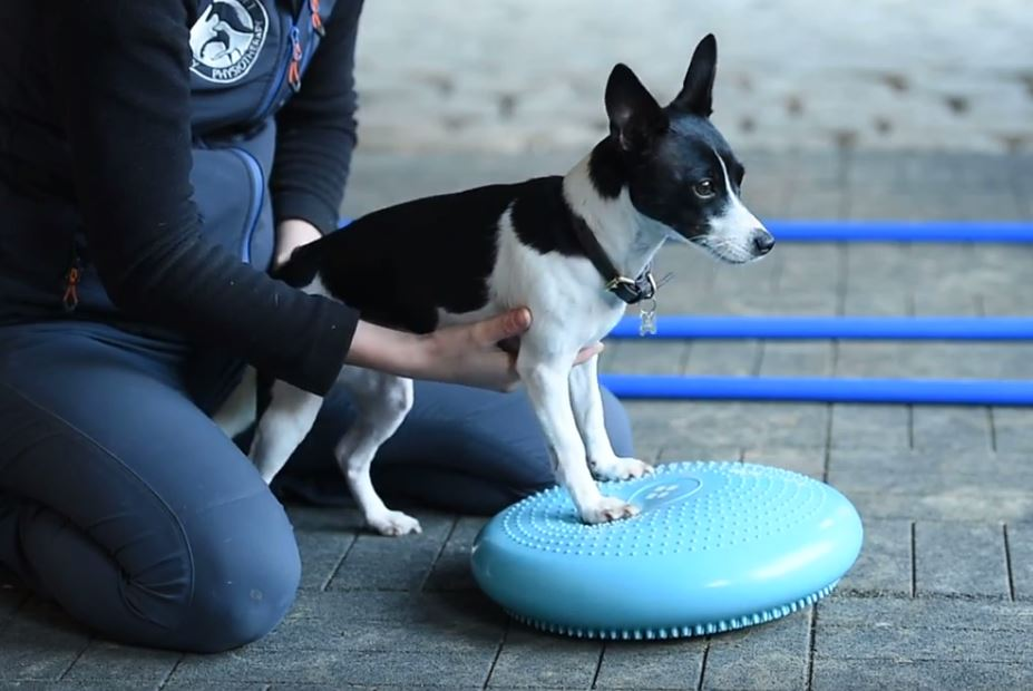 Canine Wobble Cushion